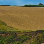 Roseland Peninsula - Felder